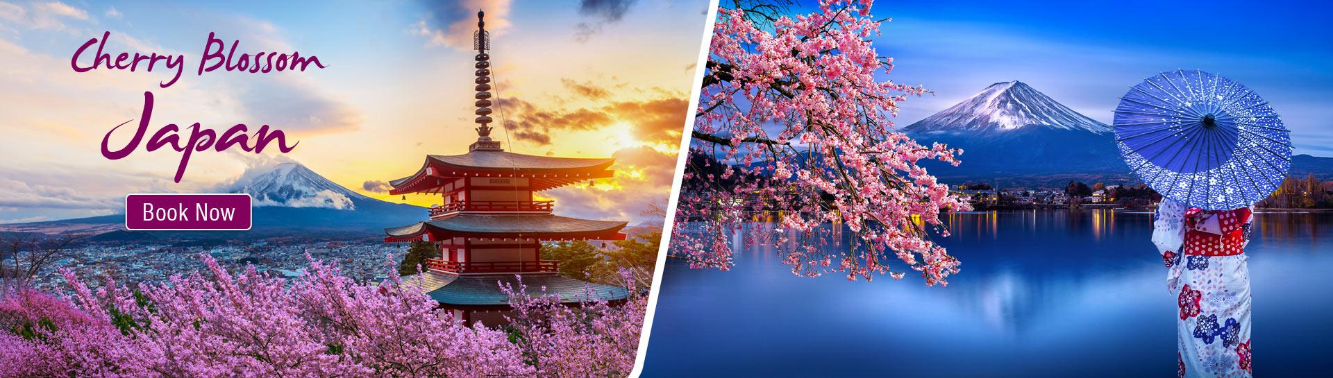 Cherry Blosssom Japan