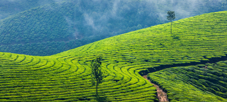 Super Break – Munnar & Kochi
