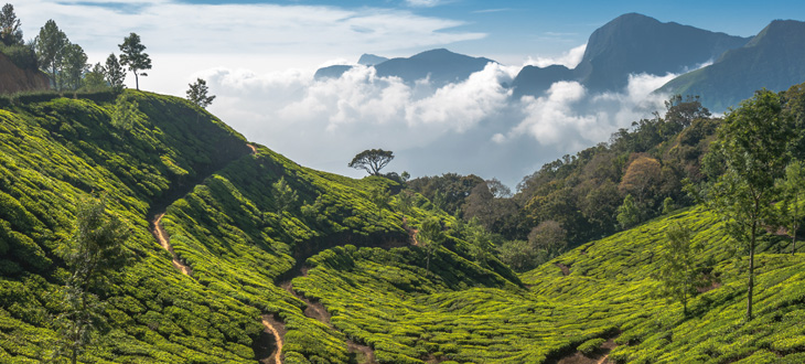 Super Break - Munnar & Kumarakom